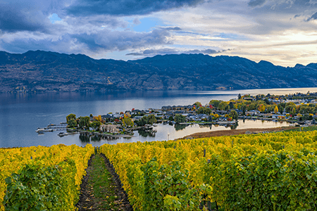 vineyards in the Okanagan region, Canada