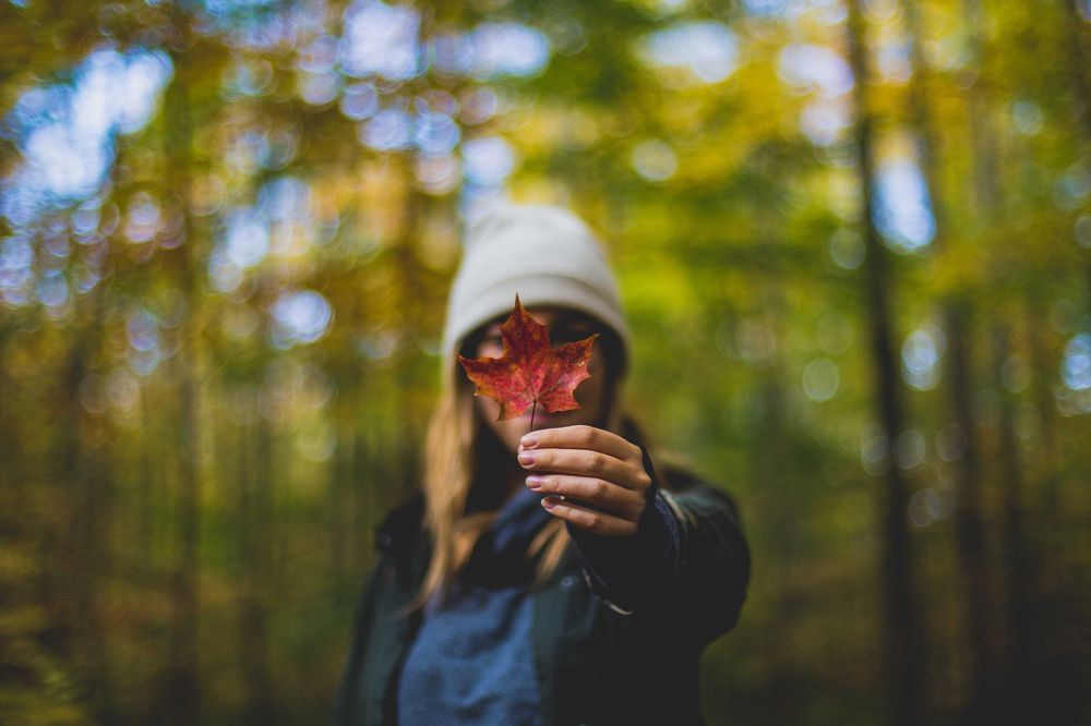 A young lady holding a single maple leaf in a forest