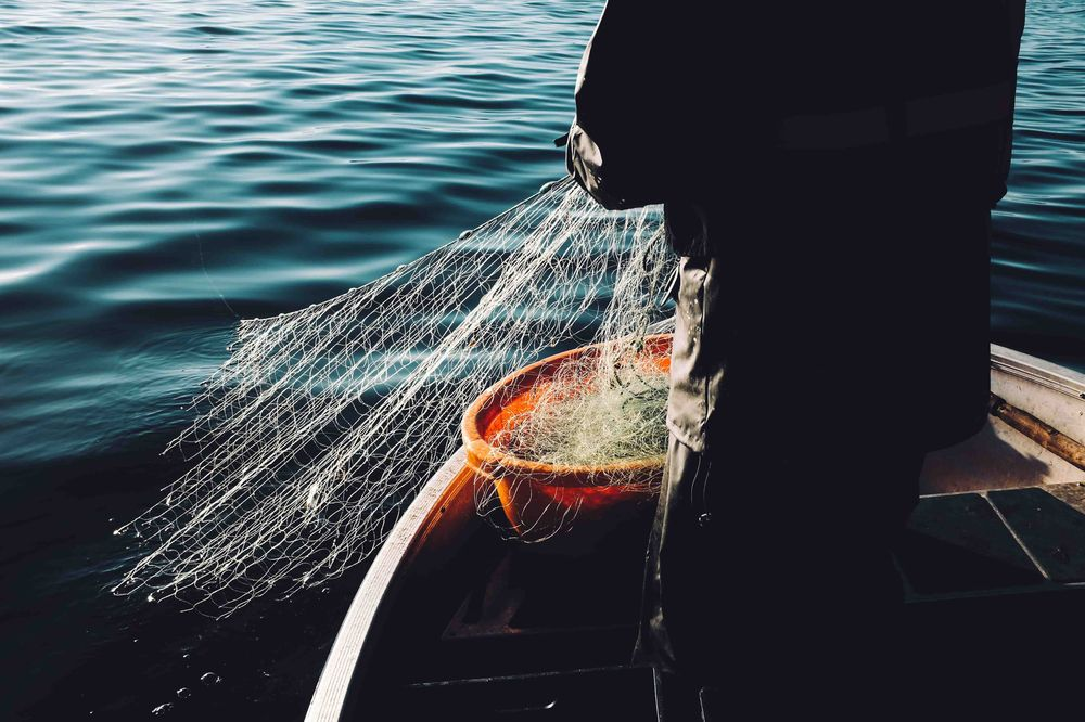 Fisherman pulling up nets