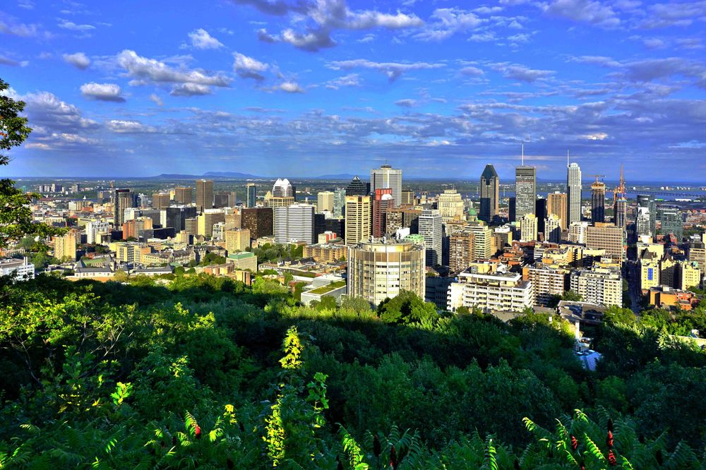 a magnificent view of mount royal in downtown montreal
