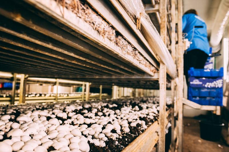 Agri-food Immigration Pilot-Mushroom production