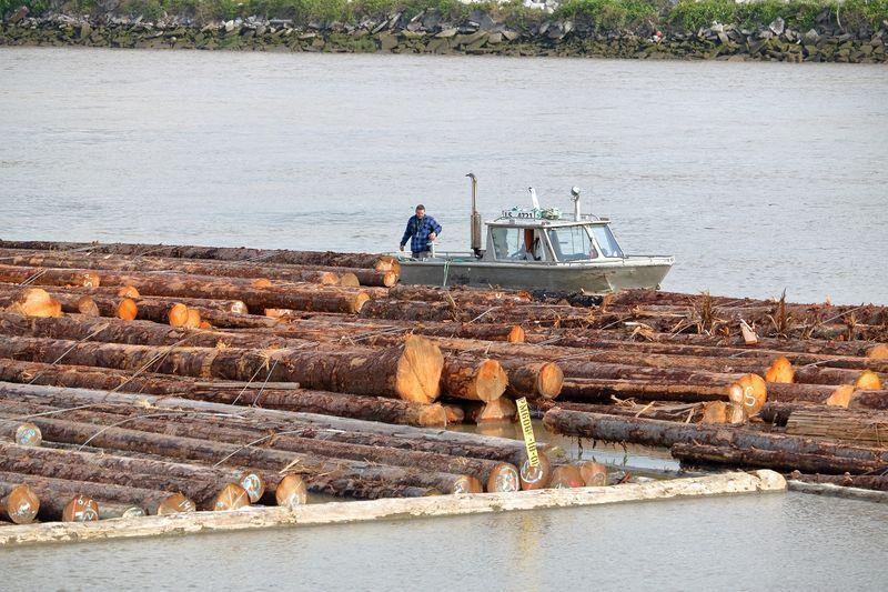 Top Forestry Jobs in Canada-Landingman