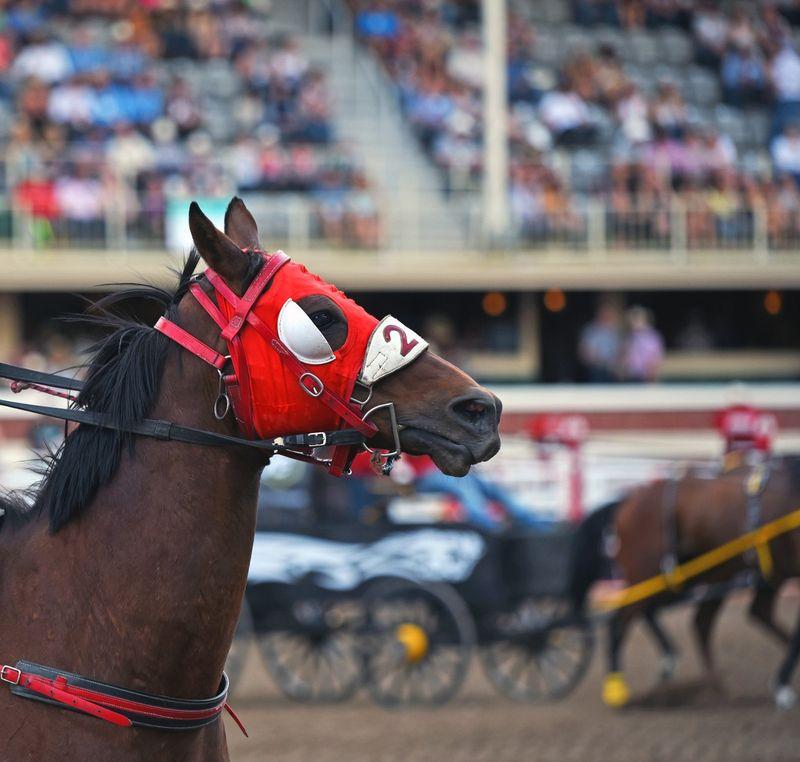 calgary stampede wagon races