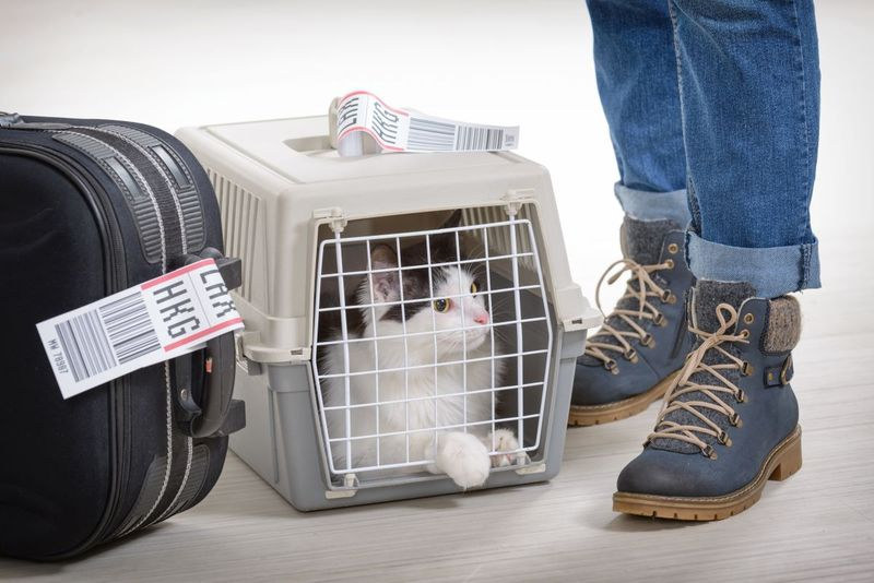 Cat in pet carrier at airport ready to immigrate to Canada