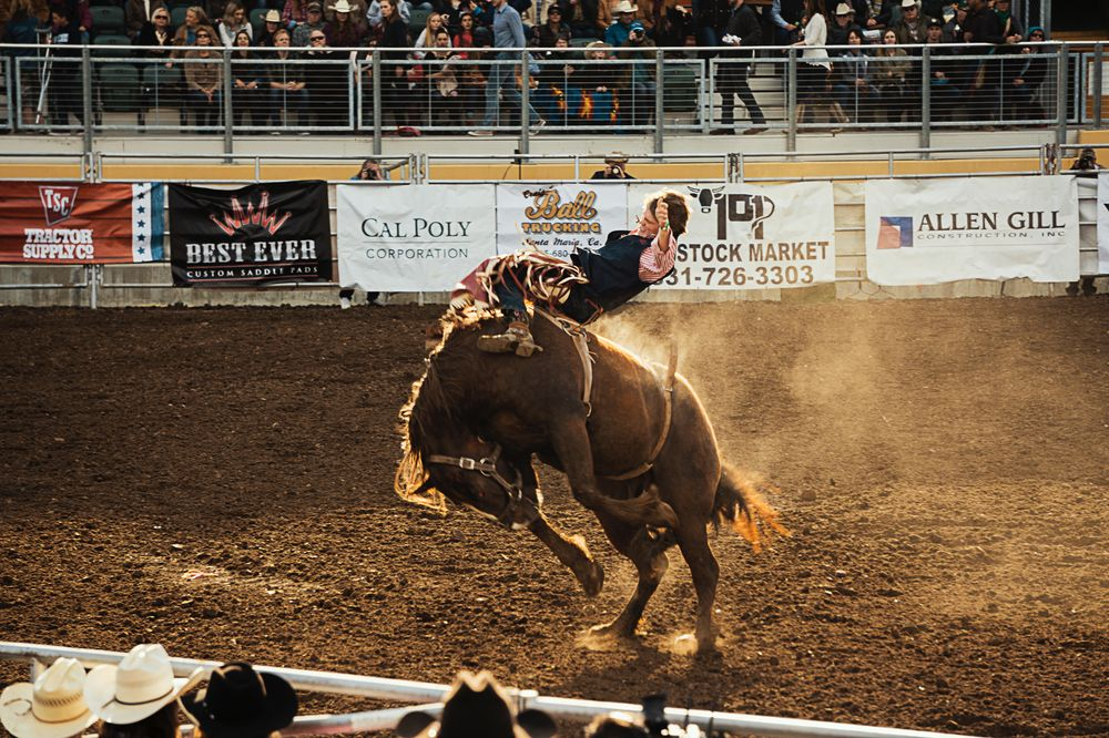 cowboy tries to ride a bull Calgary stampede