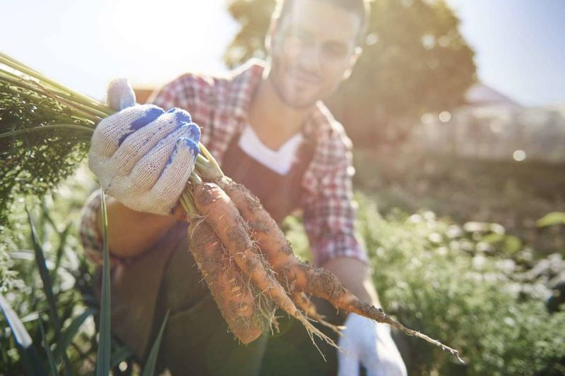 Farm worker in Canada/ Work in Canada as a farm worker