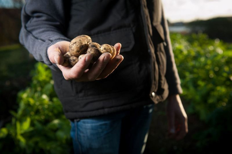 farmworker holding potatoes in front of green crops on farm | immigrate to Canada