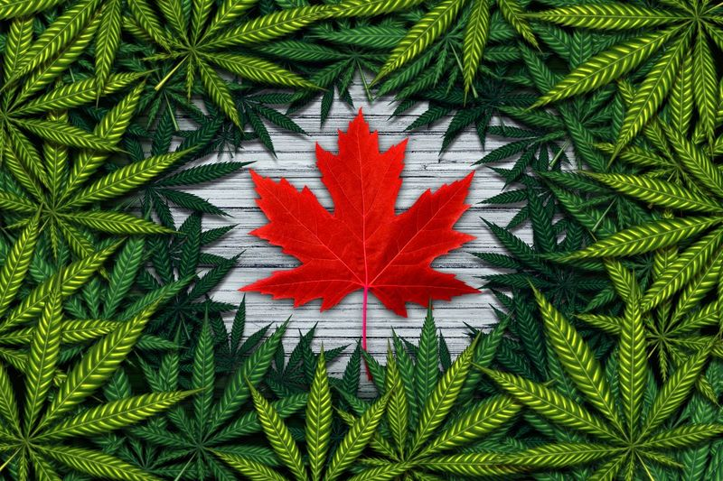 Learn how to immigrate to Canada as a cannabis farmer and secure your position in the cannabis agricultural sector.
