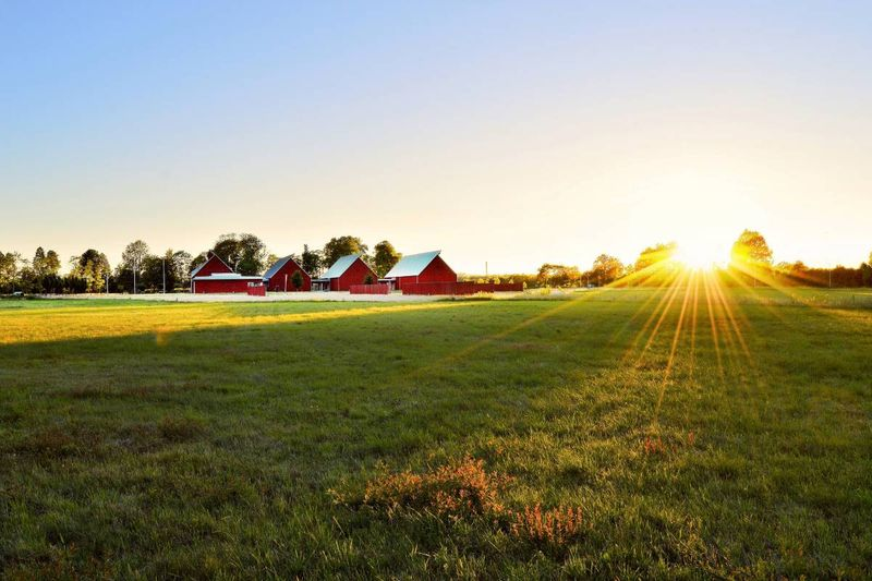 green grass field near red houses at sunset | immigrate to Canada