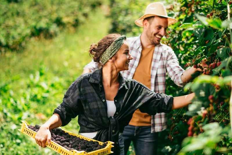 man and woman picking blackberries on farm | jobs in Canada