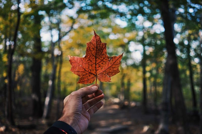 Apply for your Canada tourist visa and explore an array of amazing destinations on a budget this fall