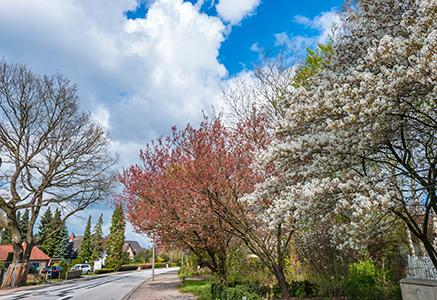 pretty suburb in spring