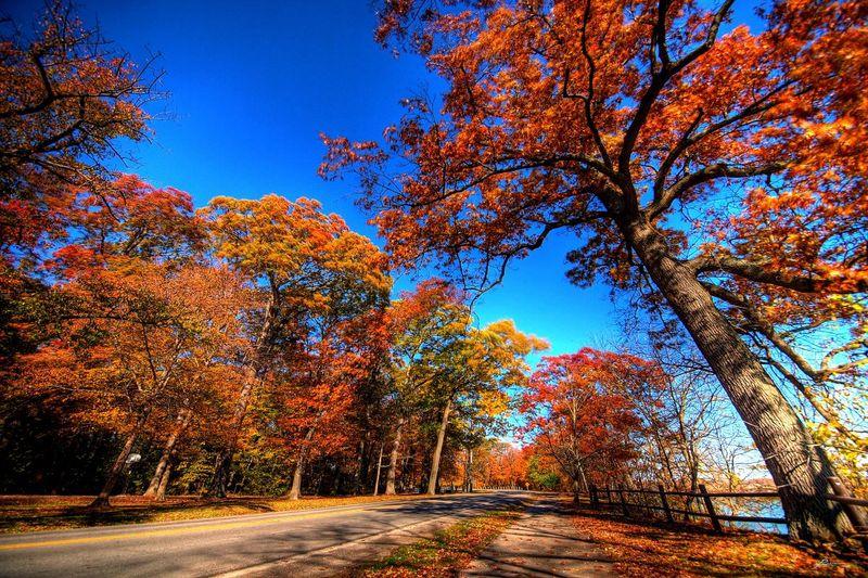 niagara-parkway-ontario-fall-trees