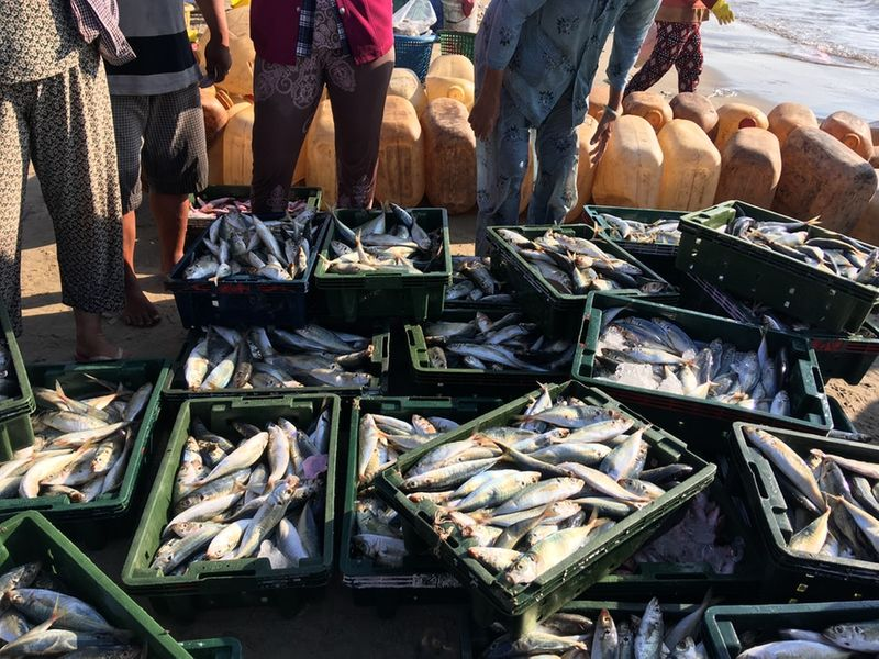 Fisheries form part of jobs in Canada for unskilled workers.