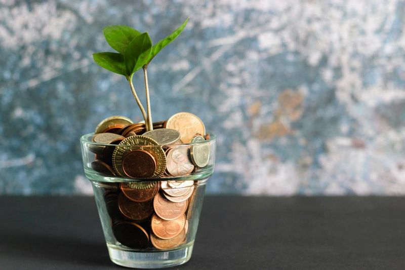 plant growth in money in glass sustainability business concept | business immigration to Canada