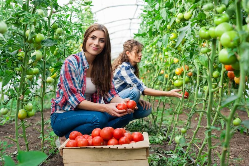 smiling woman farm worker holding tomatoes in greenhouse | how to immigrate to Canada